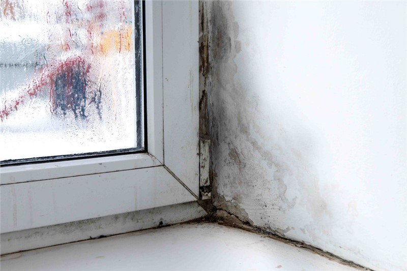 Tips for Preventing Mold Growth on Window Sills