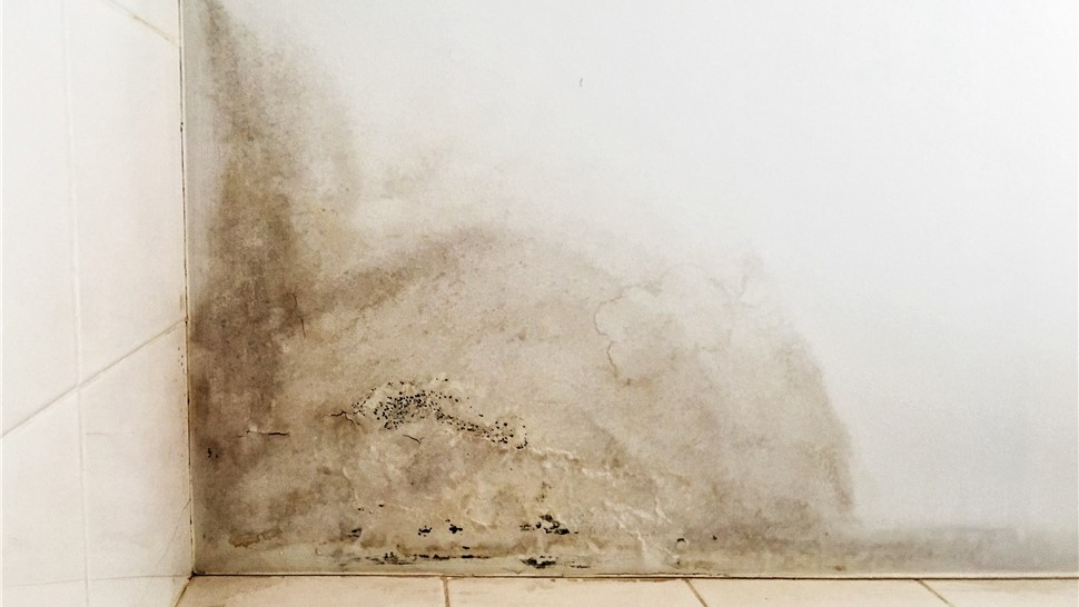 Basement Repair - Water Damage Repair Photo 1
