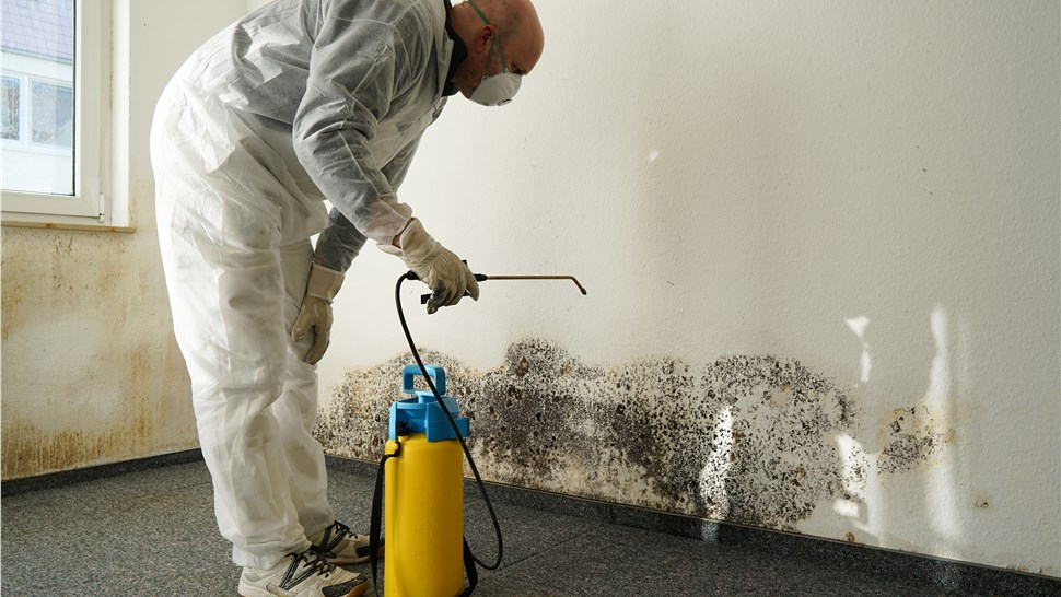 Mold - Mold Remediation Photo 1