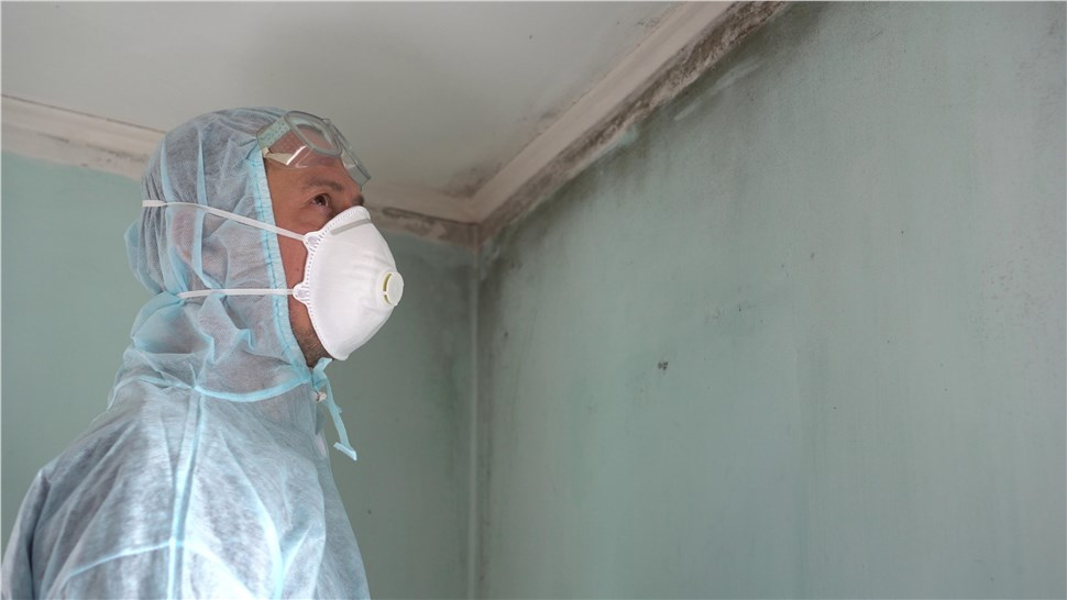 Mold - Mold Inspections Photo 1