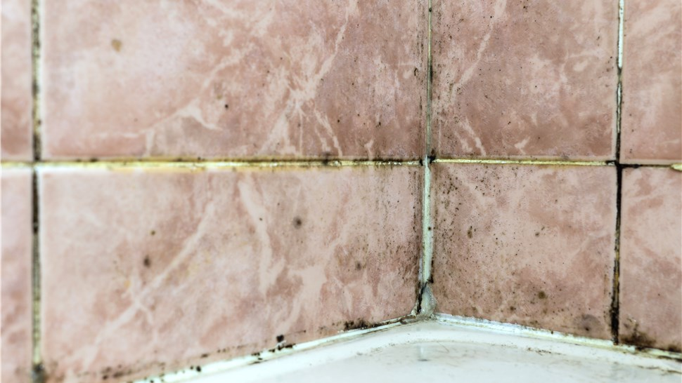 Mold - Property Managers Photo 1