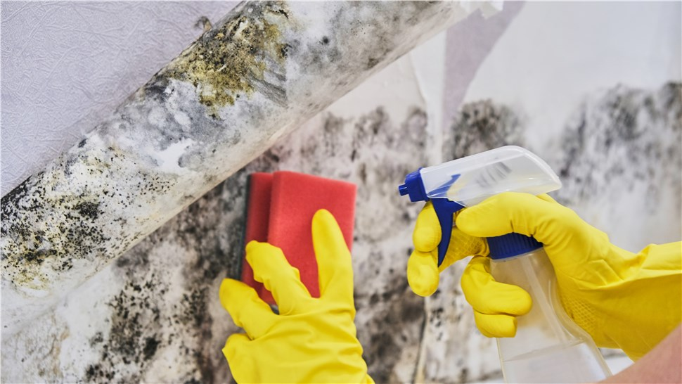 Mold - Mold Cleaning Photo 1