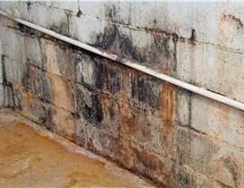 Mold Photo 4