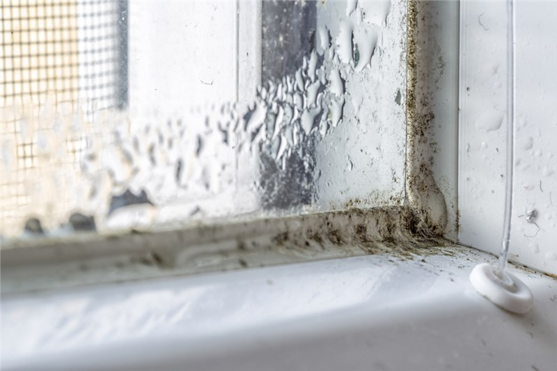 The Harmful Effects of Mildew
