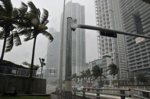 strong storm winds blowing palm trees in miami