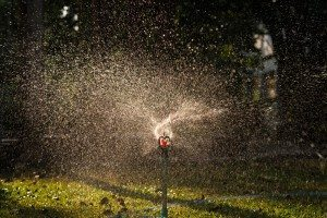 water sprinkler in garden