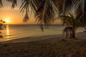 sea-turtle-beach