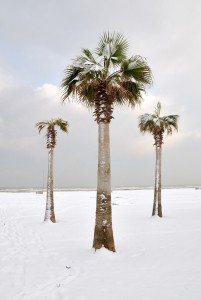 snow on palm trees in florida