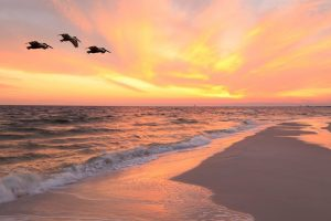 pelicans flying over beach at sunset