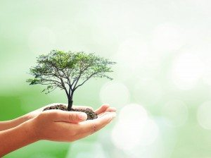 hands holding tree go green