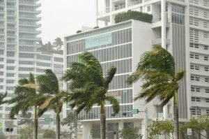 powerful winds blowing palm trees