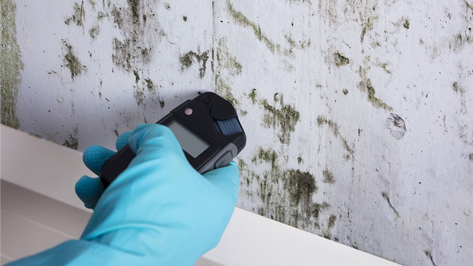 Mold Inspection Photo 1