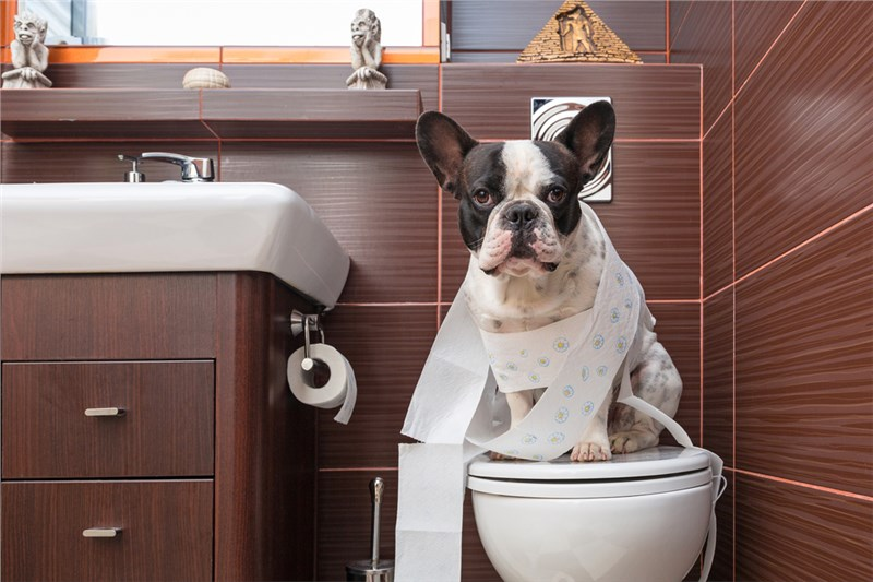 Five Plumbing Tips to Pet Proof Your Pipes