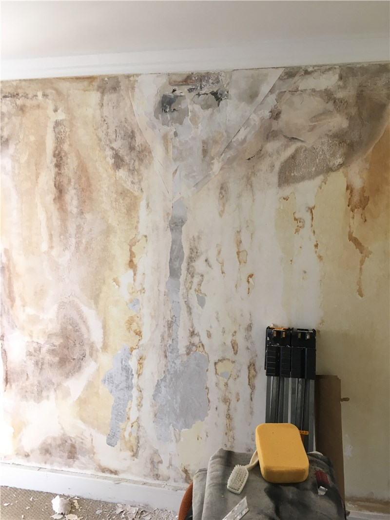 Important Things You Need To Know About Mold Inspections