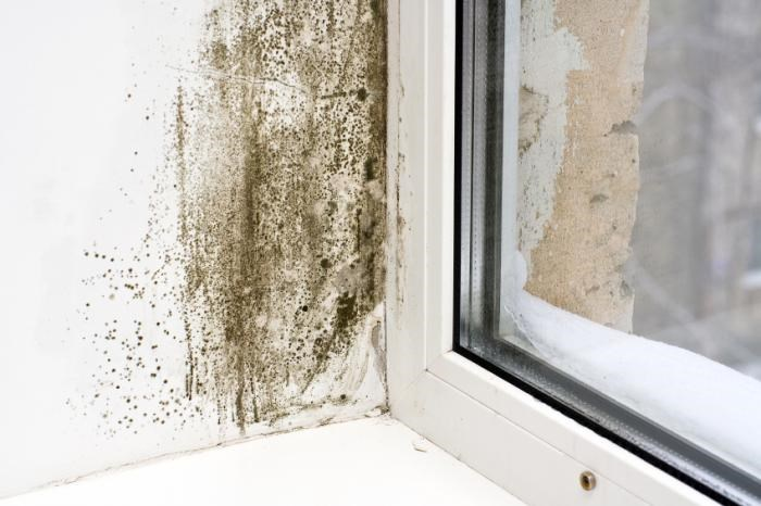 5 Tips to Help Prevent Mold in the Home