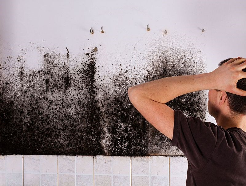 Black Mold and More: Health in the Home