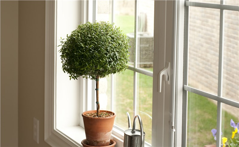 tree in the sill of new window