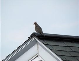 Roofing - Ridge Vents Photo 4