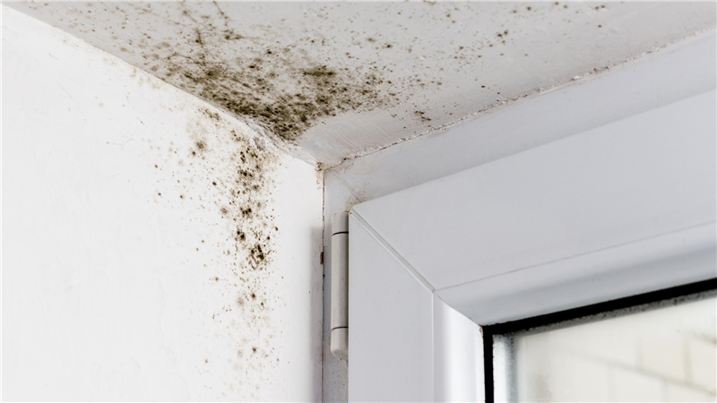 How to Keep Mold & Mildew at Bay