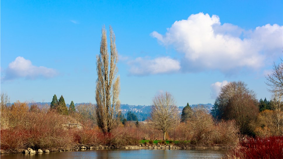 Commonwealth Lake Park Beaverton Oregon