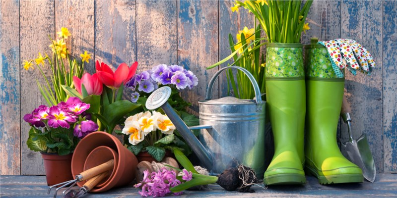 The Perfect Spring Plants for Your Garden Window