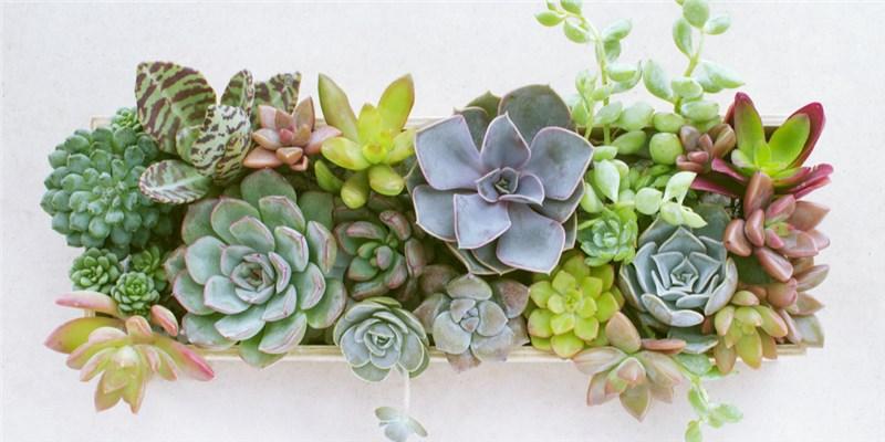 succulents grown in a garden window