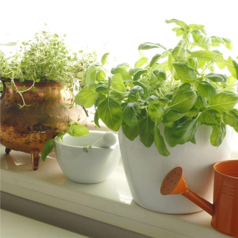 herbs grown in a garden window