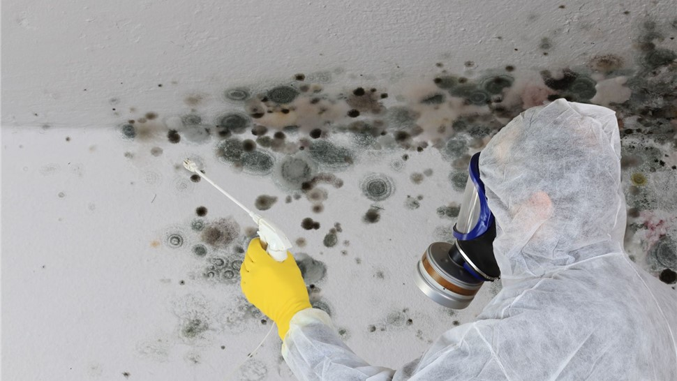 Mold Removal Photo 1