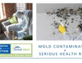 Mold Removal Photo 2