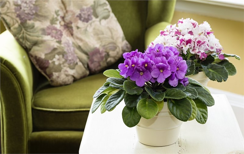 Here are the 8 Best Plants to Grow in a Sunroom!