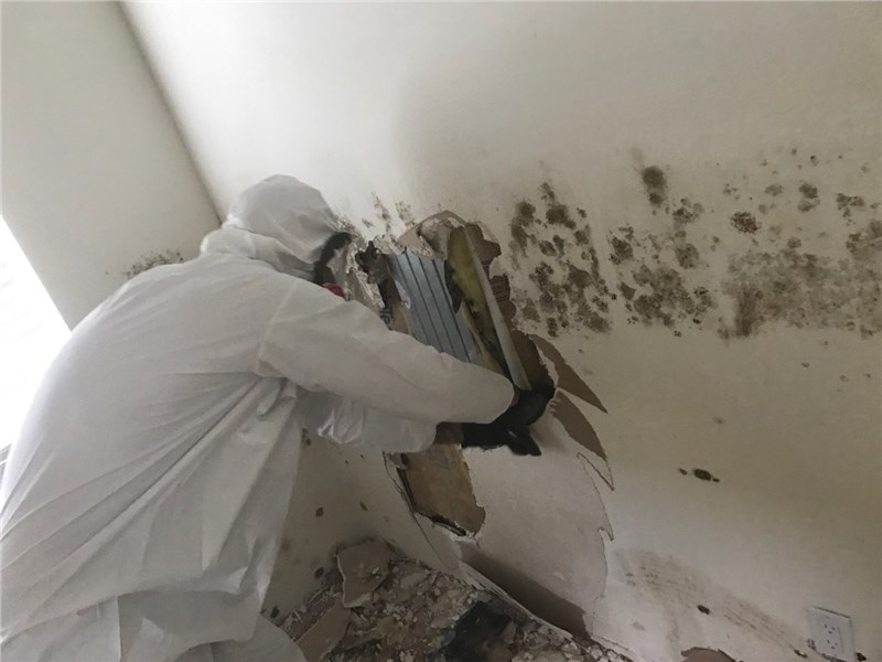 Our top 5 most frequently asked questions about Mold in your Hawai'i Home Answered Here!