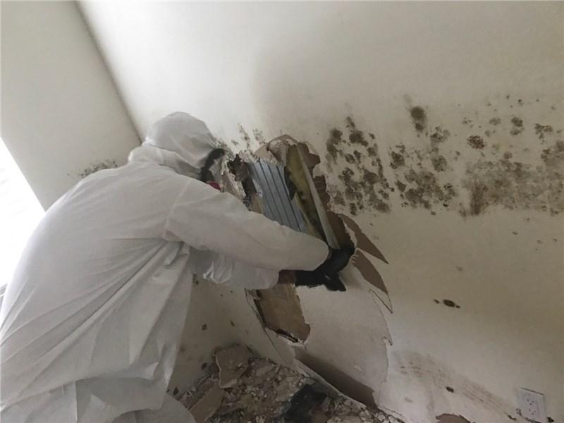 Premier Restoration Mold Remediation Technician