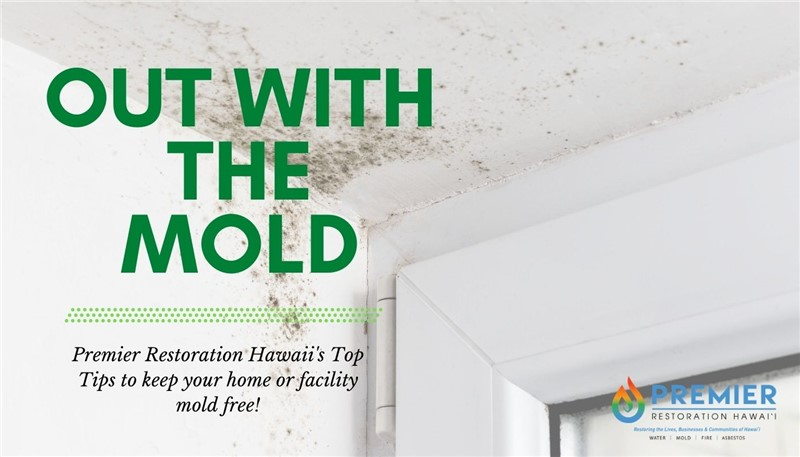 Our Top 5 Tips to Prevent Mold! As Featured on Maui Now News