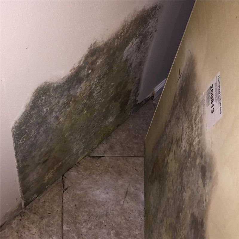 When is the last time you checked behind your refrigerator for mold growth?