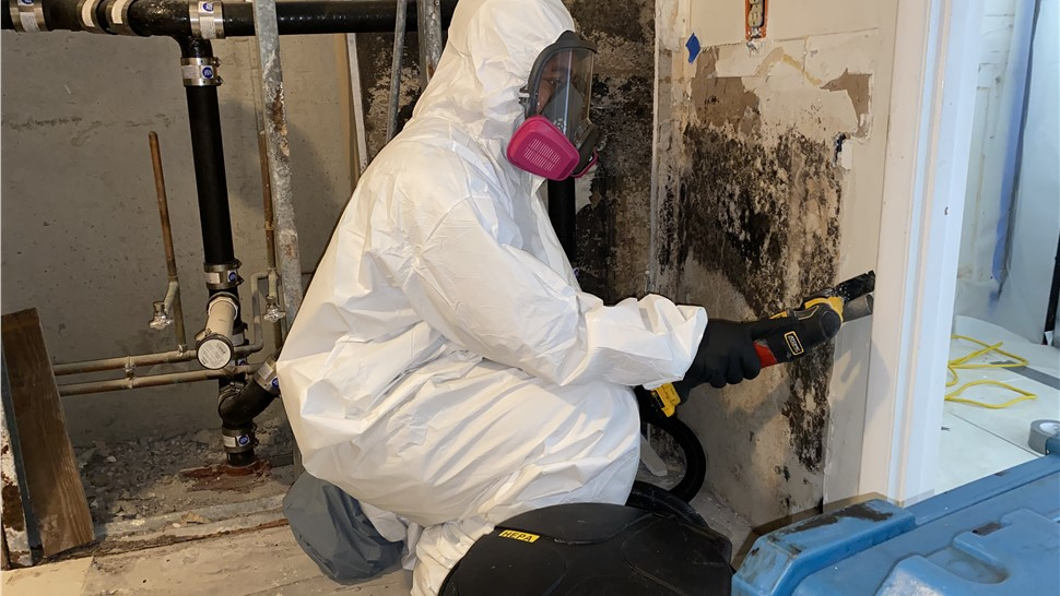 Mold Removal & Remediation Photo 1