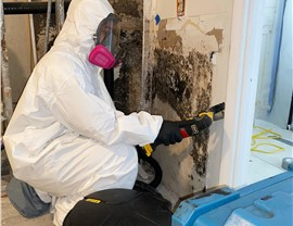Residential Mold Removal Photo 2