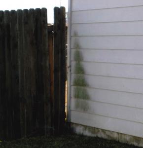 Water Damage House Siding