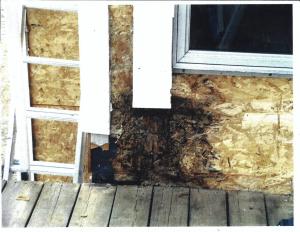 Rot Mold Siding Damage