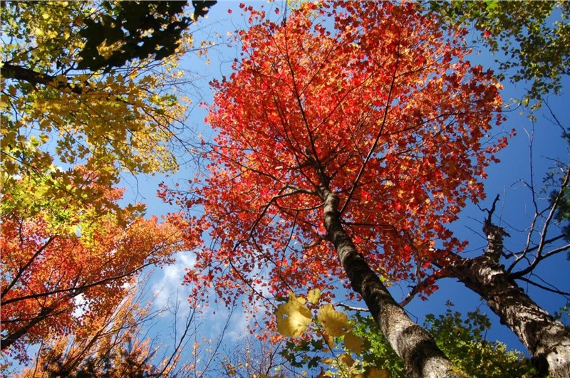 photo of colorful trees